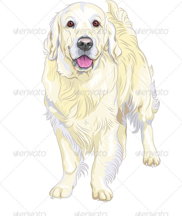 Vector dog breed Labrador Retrie - Animals Characters