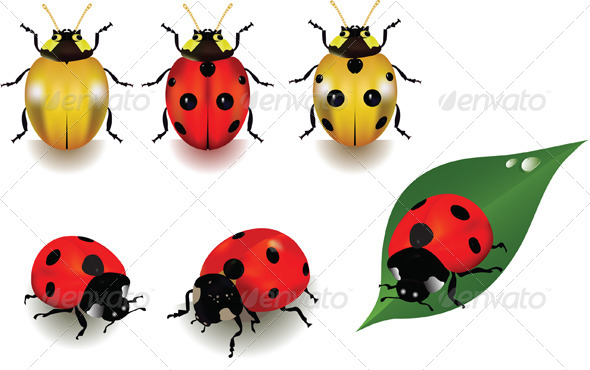 GraphicRiver Ladybugs 4042899