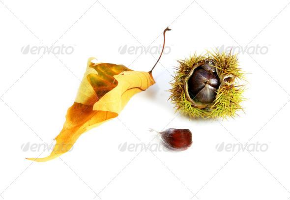PhotoDune edible chestnut 4102075