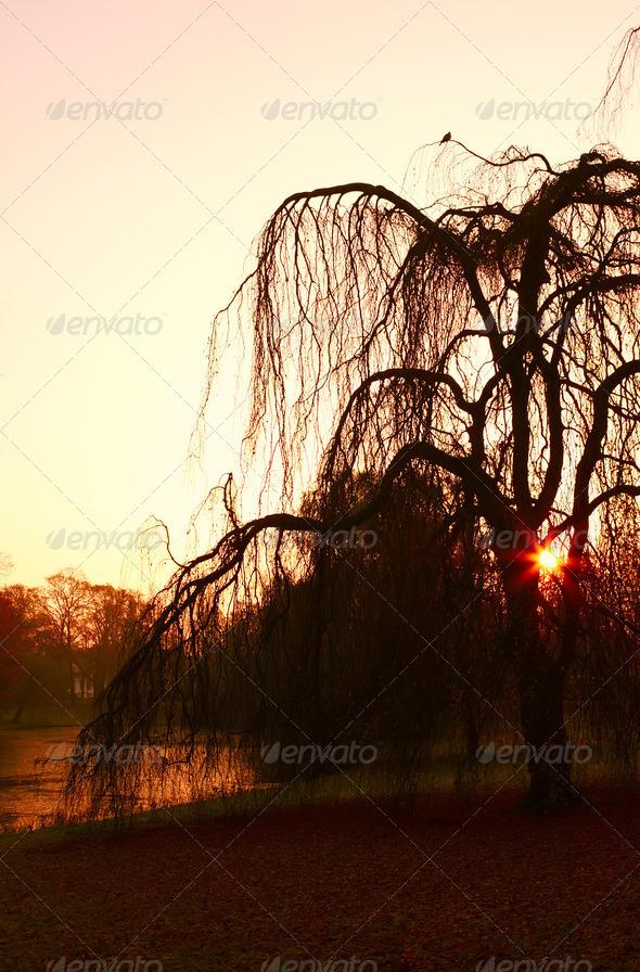 PhotoDune tree silhouette 4102085