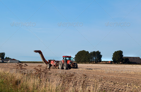 PhotoDune tractor on potato field 4102205