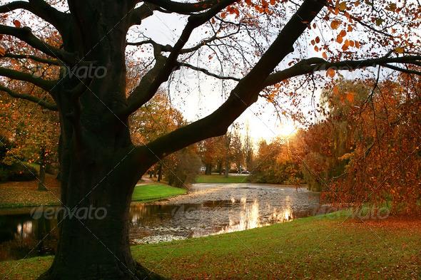 PhotoDune sunrise in the park 4102265