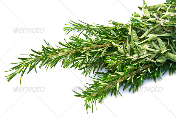 PhotoDune sage and rosemary 4048805