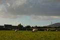 Field and grazing sheep, Ireland - PhotoDune Item for Sale