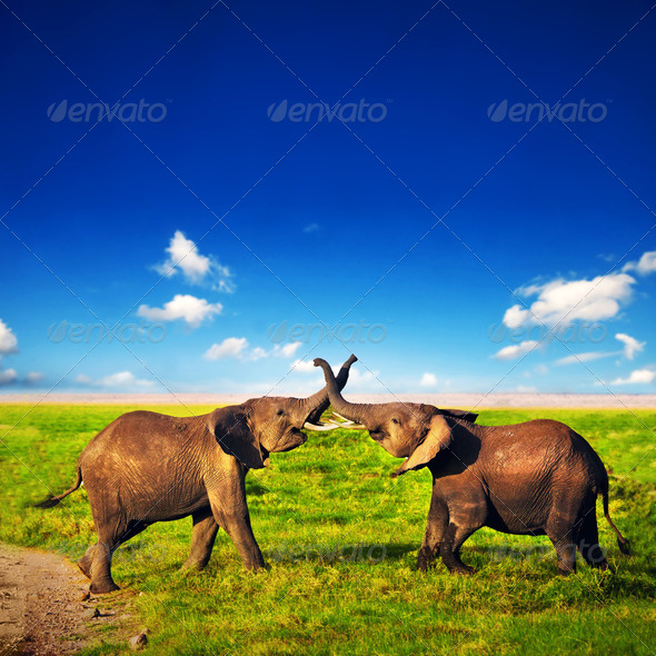 Elephants playing on savanna. Safari in Amboseli, Kenya, Africa - Stock Photo - Images