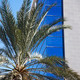 palm tree against glass and iron business buildings - PhotoDune Item for Sale