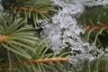 Ice figure on a pine tree winter - PhotoDune Item for Sale