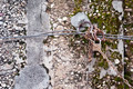 Old padlock on a rusted chain attached on an old wall - PhotoDune Item for Sale