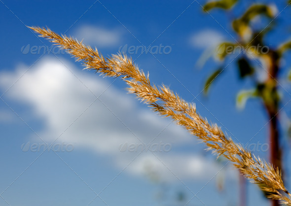 PhotoDune Grass on a background of the sky 4082480
