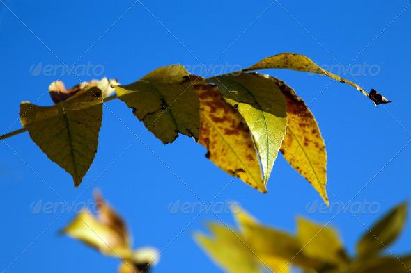 PhotoDune Yellow leaves 4082493