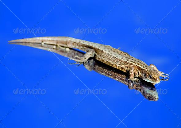 PhotoDune Sky lizard 4082708