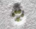 Pawprint - PhotoDune Item for Sale
