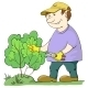 Gardener Cuts a Bush - GraphicRiver Item for Sale