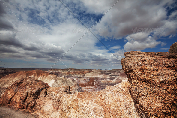 Petrified forest - Stock Photo - Images