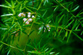 Asparagus Fern - PhotoDune Item for Sale