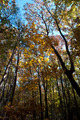 Fall Trees 1 - PhotoDune Item for Sale