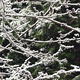 Snow Falling On Tree Branches - VideoHive Item for Sale