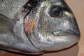 Fresh sea bream on a table - PhotoDune Item for Sale
