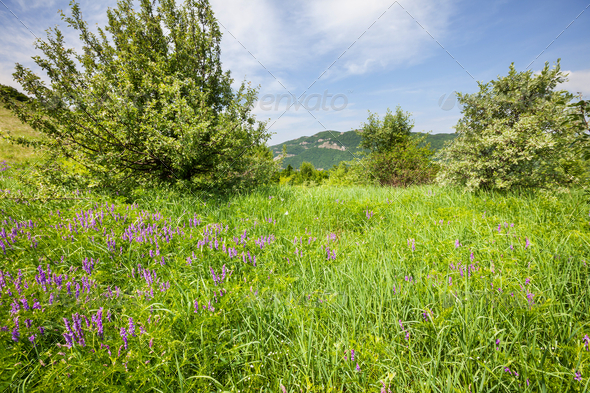 Spring meadow - Stock Photo - Images