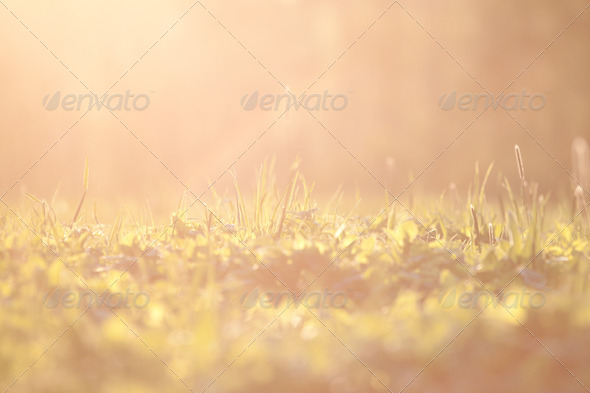 PhotoDune Sunset grass background with direct light 4152510