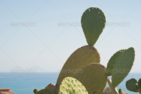 PhotoDune Prickly pear cactus plant 4141370