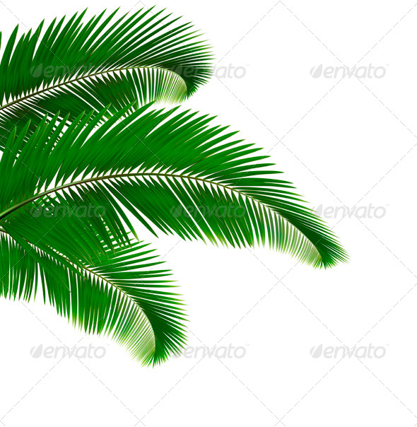 GraphicRiver Palm Leaves 4143078