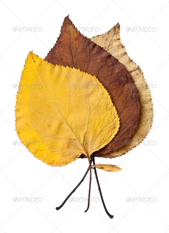 PhotoDune Autumn leaves isolated on white background 4154185
