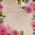 Background with Roses - PhotoDune Item for Sale