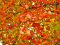 red leaves in autumn  - PhotoDune Item for Sale