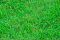 green grass texture for background - PhotoDune Item for Sale