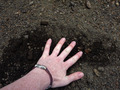 Hand on Ground - PhotoDune Item for Sale