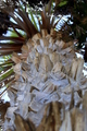 Palm Tree - PhotoDune Item for Sale
