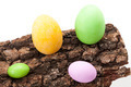 Easter Eggs On Bark - PhotoDune Item for Sale