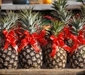 Pineapples Decorated with Red Ribbons - PhotoDune Item for Sale