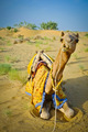 Sitting Camel - PhotoDune Item for Sale