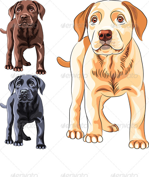 Vector Set of Labrador Retriever Puppies - Animals Characters