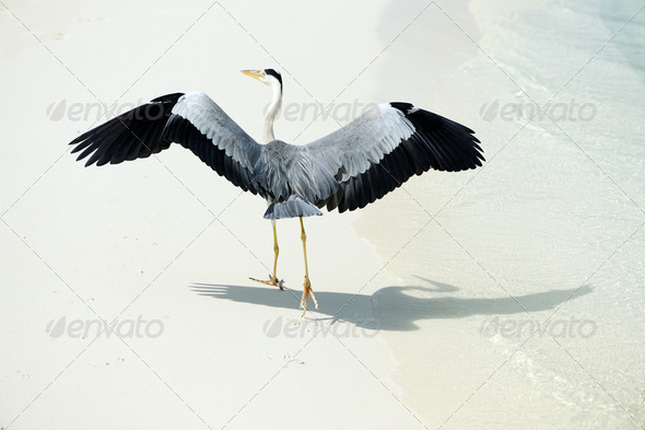 PhotoDune Heron at the beach 4229646