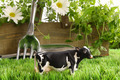 Spring herbs and flowers in the grass with toy cow - PhotoDune Item for Sale