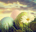Large easter eggs in the tall grass - PhotoDune Item for Sale