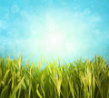 Fresh spring grass with blue sky - PhotoDune Item for Sale