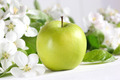 Delicious green apple with blossoms - PhotoDune Item for Sale