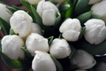White Tulips 2 - PhotoDune Item for Sale