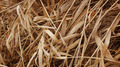 Dried Autumn Straw Close Up 2 - PhotoDune Item for Sale