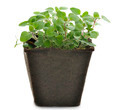 Oregano Herb - PhotoDune Item for Sale
