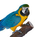 Macaw Parrot Perching - PhotoDune Item for Sale