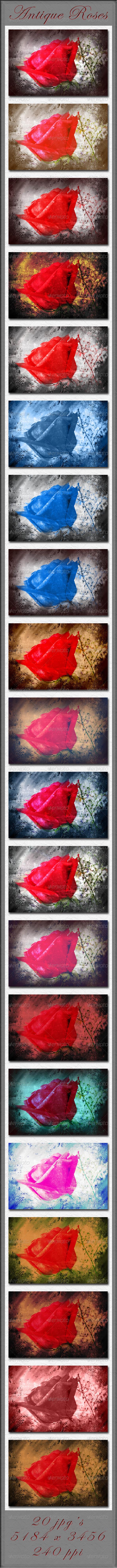 GraphicRiver Antique Roses 4262882