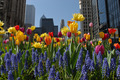 Downtown full of colorful flowers - PhotoDune Item for Sale