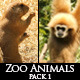 Zoo Animals Pack 1 - VideoHive Item for Sale