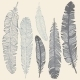 Feather Set - GraphicRiver Item for Sale