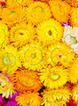 A bouquet of yellow flowers - PhotoDune Item for Sale